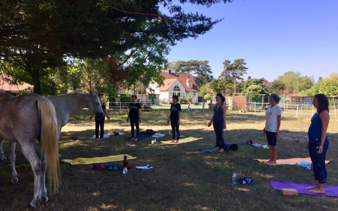 [FEEDBACKS] – Journée Yoga & Cheval – Fontainebleau