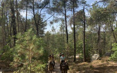 [Feedback] Journée Oxygène (Yoga, Cheval & Brunch Bio) – Fontainebleau