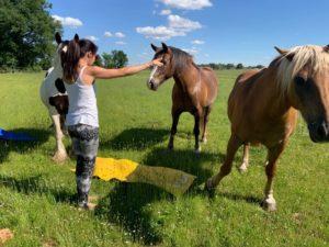 Méditation avec les chevaux