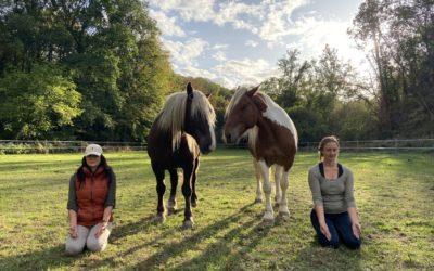 Méditation, pranayama, communication non verbale avec les chevaux